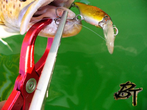 Close Up of Lippa4Life holding trout safely and securely