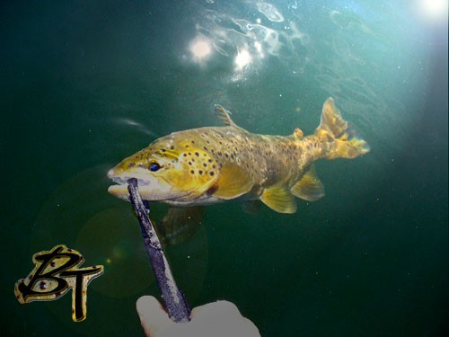 Medium size brown controlled in water by Special Blend Lippa4Life