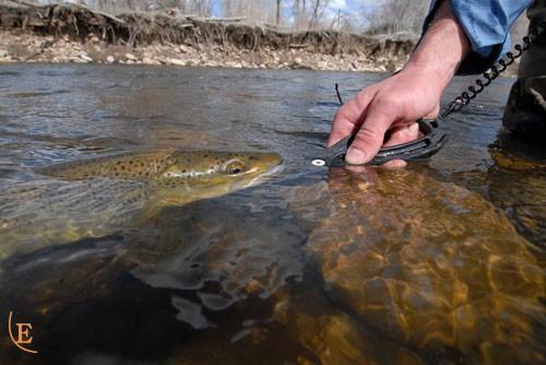 Special Blend L4L controlling trout