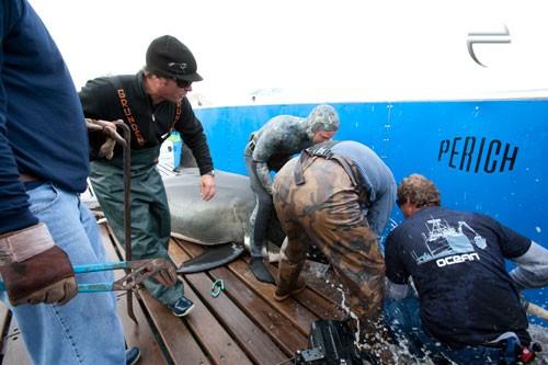 Installing shark breathing hose