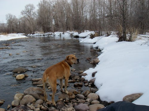 Local River – with the dog that is either perfect or horrible, nothing in between