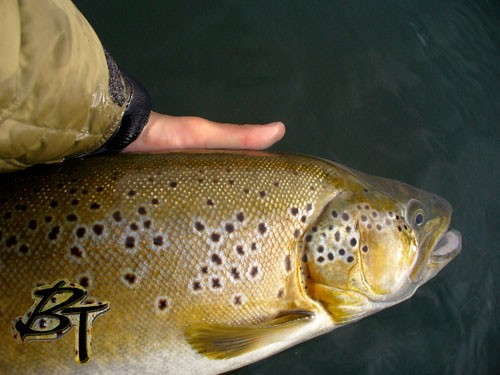 Another BIG Brown